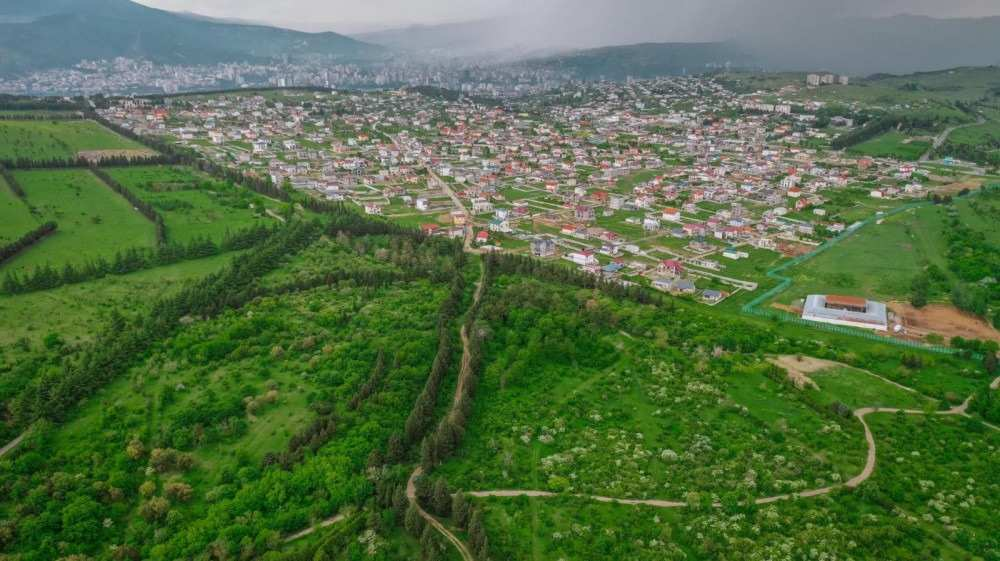 Design of Tbilisi Dendrology Park to Start – Tbilisi City Hall