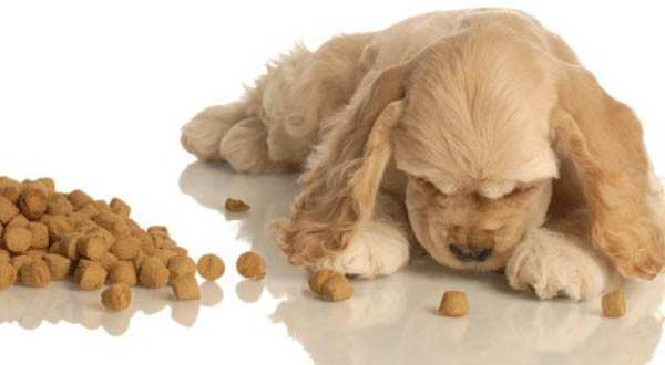 The European Union Has Allowed the Export of Pet Food From Georgia