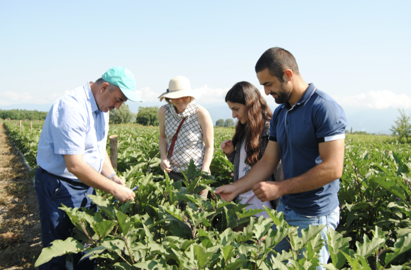 Georgian Farmers Increase Incomes and Productivity With EU and FAO Support