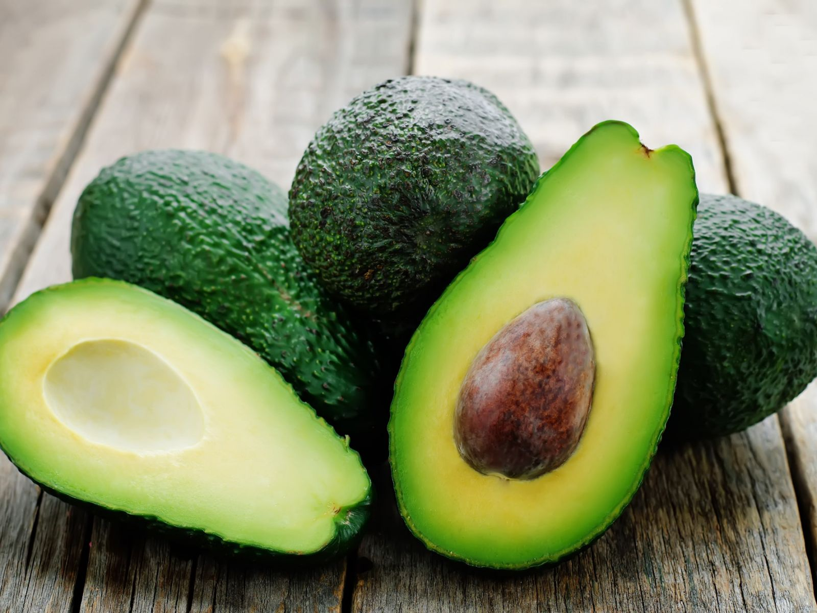 The First Commercial Avocado Farm Established in Georgia