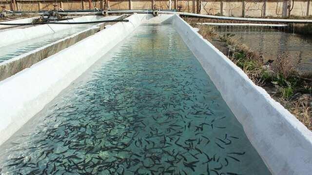 ნებართვა და მოსაკრებელი თევზის მოშენებისთვის - რას ითვალისწინებს ახალი კანონპროექტი?