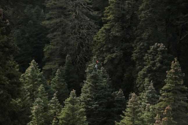 ეკლესიების გარშემო 20 ჰა-მდე ტყის საპატრიარქოსთვის გადაცემა დასაშვები ხდება - კანონპროექტი
