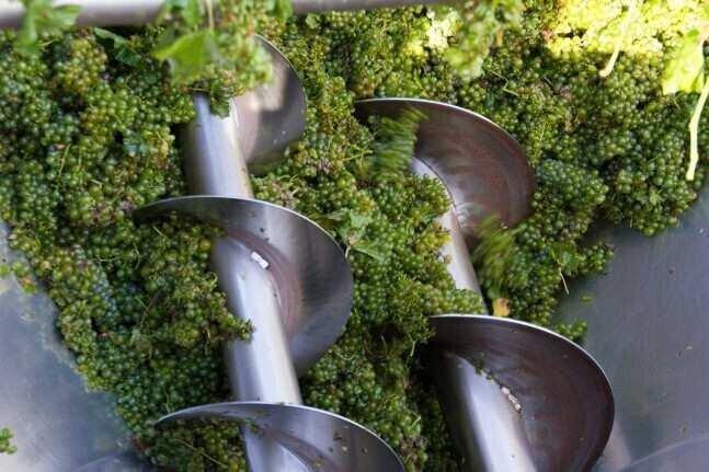საქართველოში ორგანული ღვინის ვენახებს მთლიანი ვენახების ფართობის მხოლოდ 0.3% უჭირავს