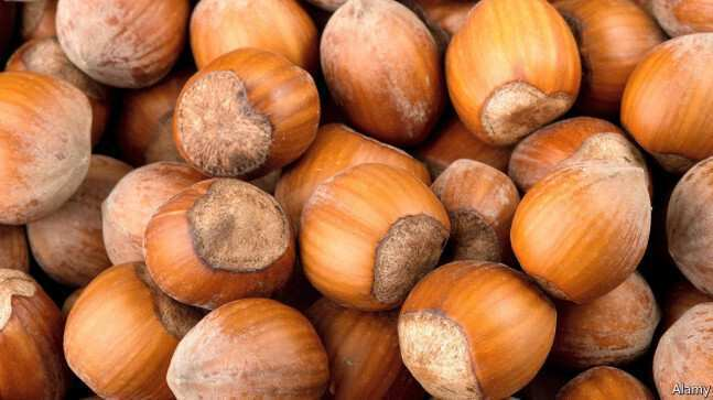 How is the condition related to the hazelnut exports? – Interview