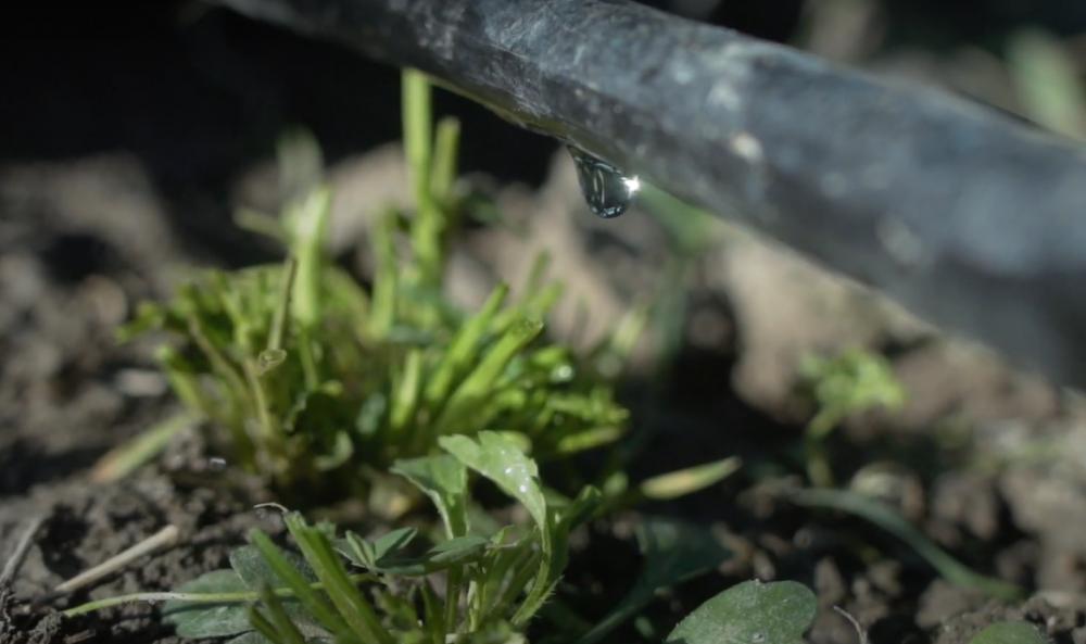 FAO: საქართველოში ფერმერთა მხარდასაჭერად 3.2 მლნ ლარის საგრანტო პროგრამა იწყება