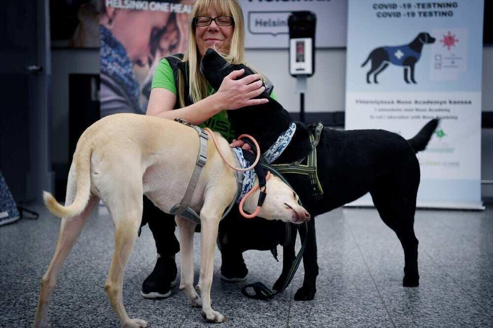ჰელსინკის აეროპორტში COVID-19-ით ინფიცირებულთა ამოსაცნობად ძაღლებს გამოიყენებენ