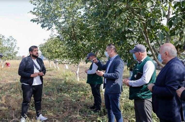 სოფლის განვითარების სააგენტო: სახელმწიფოს მხარდაჭერით 10,000 ჰა-მდე  ბაღები გაშენდა