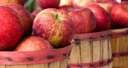 Georgia received 947 000 USD from apple export – the Ministry
