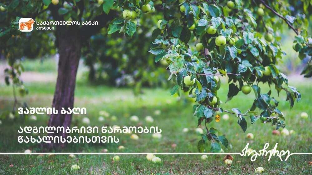 """""""საქართველოს ბანკის"""" ფინანსური მხარდაჭერით გორში ვაშლის ბაღები გაშენდა"""