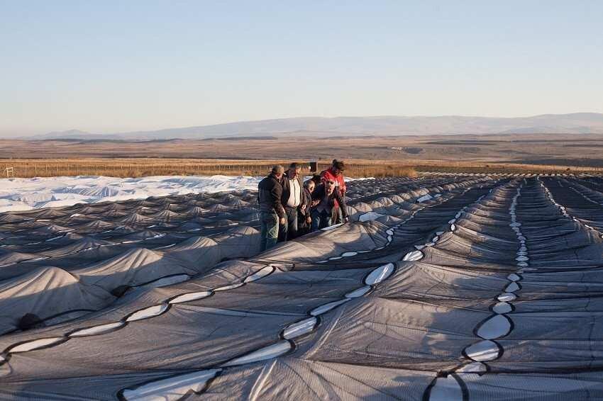 500 000-ლარიანი ინვესტიციით ასპინძის მაღალმთიან სოფელში მარწყვის პლანტაცია გაშენდა