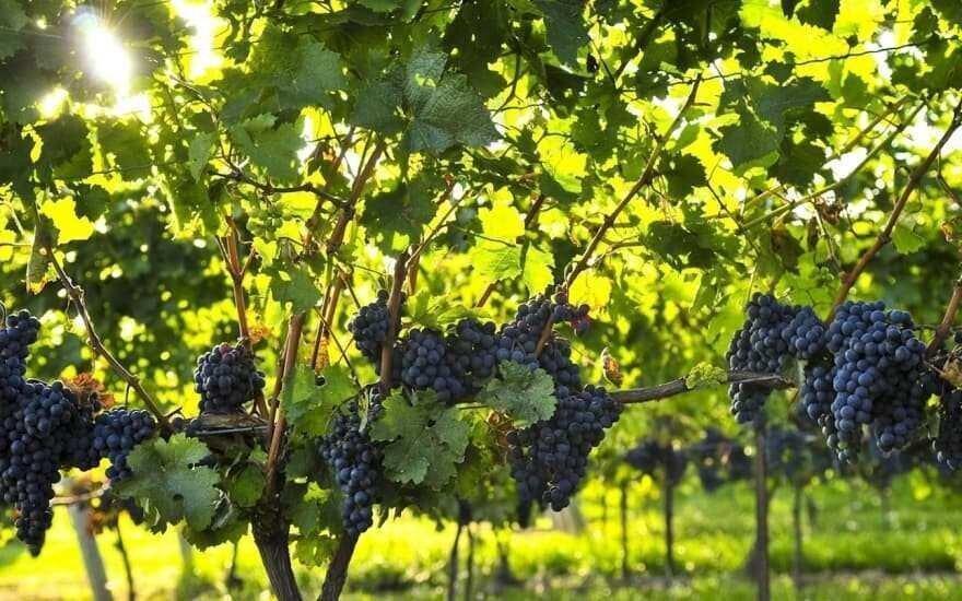 2021 წლიდან ქართული ღვინო დაიწყებს ხარისხის ახალ ეტაპზე გადასვლას - ლევან დავითაშვილი