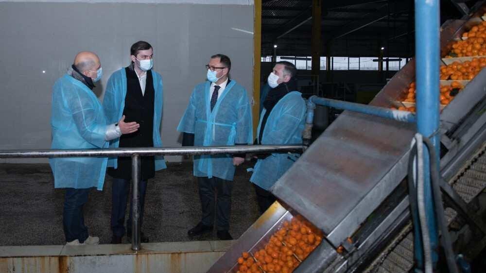 Georgia citrus exports reached 35 thousand tons