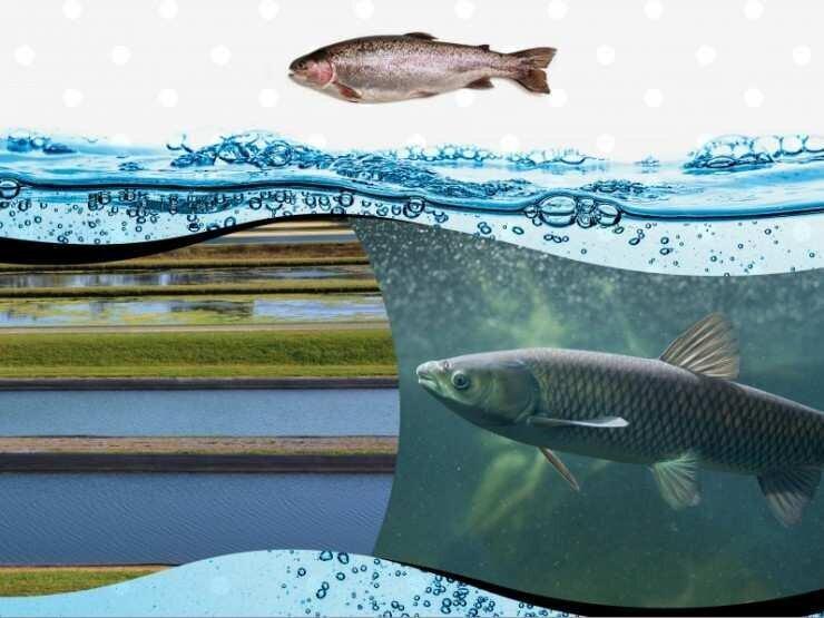 საქართველოში მტკნარი წყლის აკვაკულტურის შესახებ ღირებულებათა ჯაჭვის კვლევა იწყება