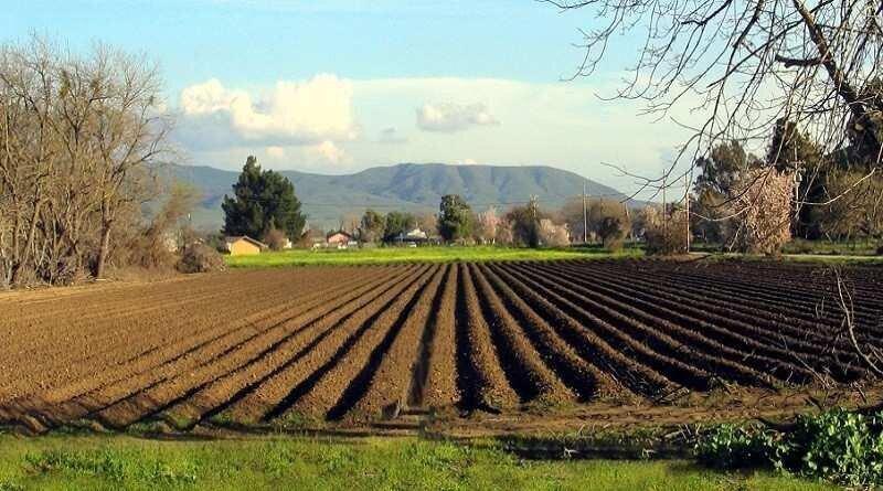მთავრობამ სასოფლო-სამეურნეო მიწის აღრიცხვის წესი დაამტკიცა