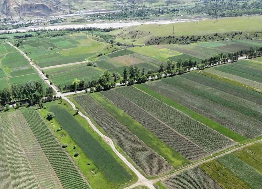 """""""სახელმწიფო მიწა ფერმერისთვის ძვირია"""" - სექტორი დაანონსებულ ცვლილებებს აფასებს"""