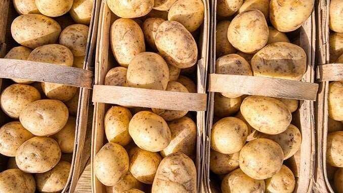 Potato Imports Was Up In Georgia