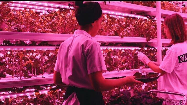 """""""Spacefarms"""" - ბოსტნეული ჭკვიანი ტექნოლოგიებით აღჭურვილი სივრციდან"""