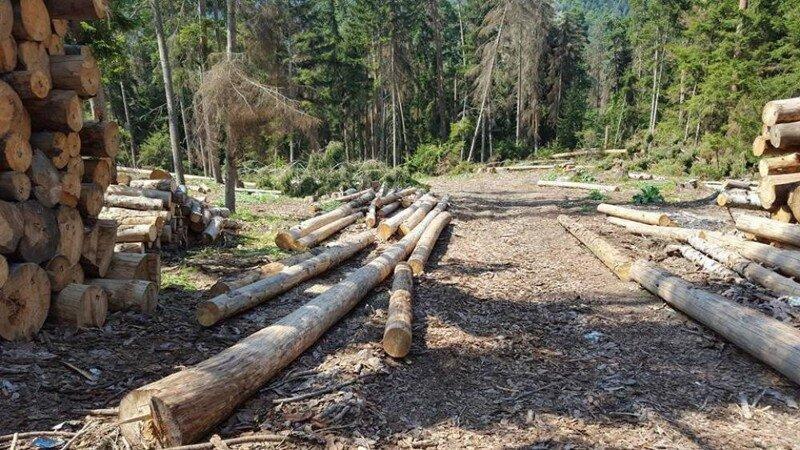 2023 წლიდან მოსახლეობა ტყეში შეშას ვეღარ მოჭრის