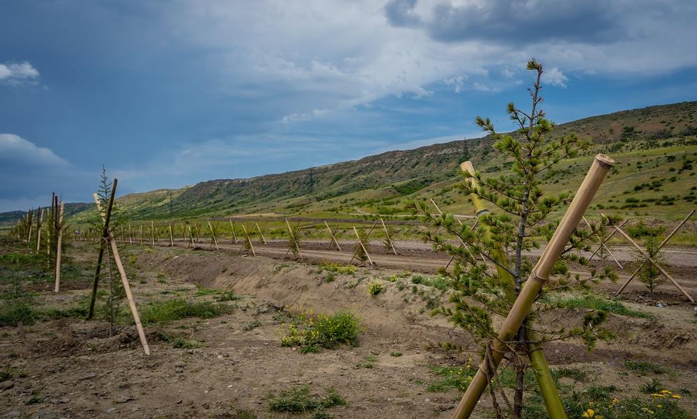 ლისის ტბის ჩამდინარე წყლით მკვებავი არხის აღდგენა დაიწყო