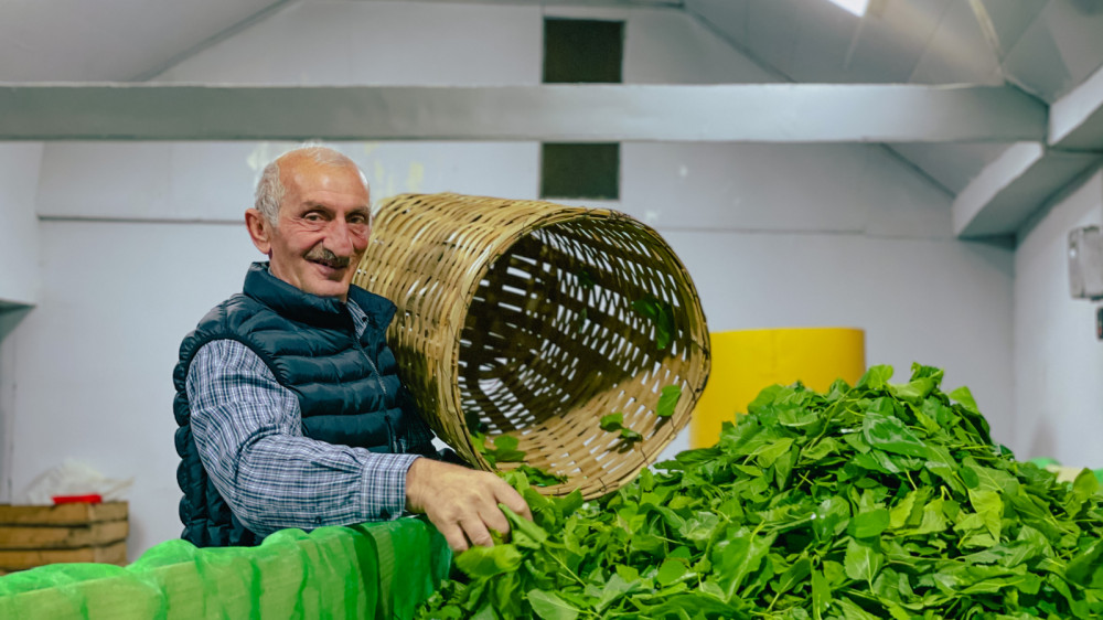 Production of Organic Tea and Fish – Supporting the Green Economy in Georgia