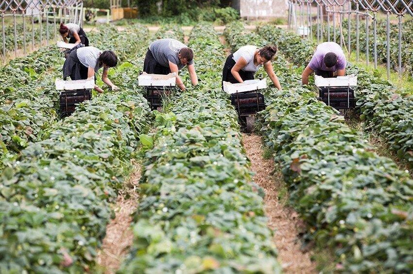 გერმანიაში დასაქმებულ ქართველებს, რომელთა შრომის პირობები დაირღვა, ახალ დამსაქმებლებთან გადაიყვანენ - საელჩო