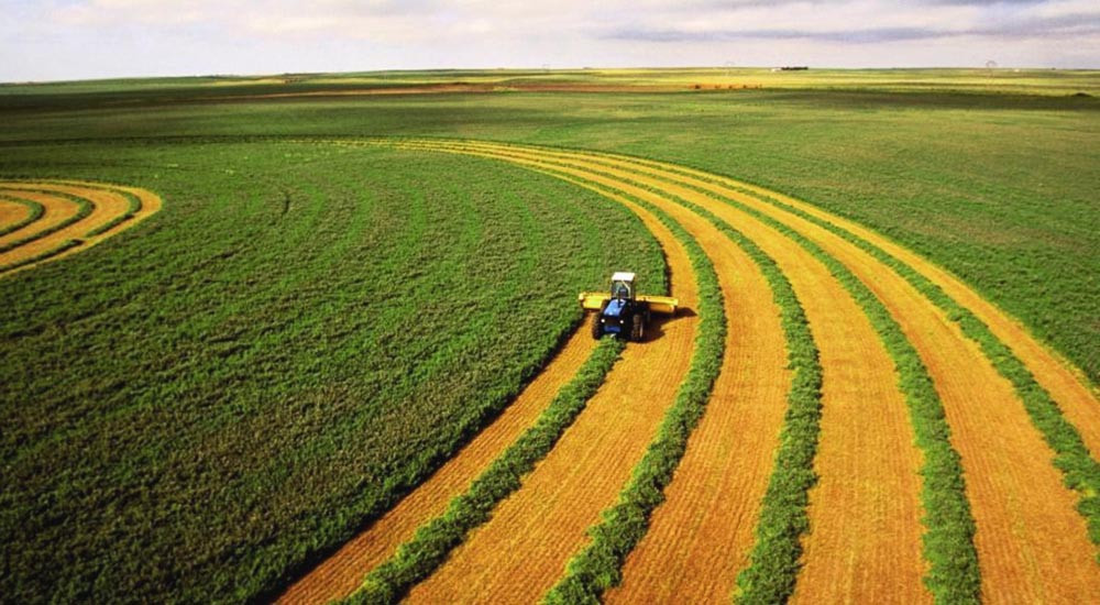 Turkey's Agricultural Income Rose 20% during Pandemic 2020