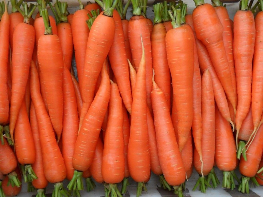 Prices for Georgian Carrots Are Higher Than Last Year, but Lower Than in 2019