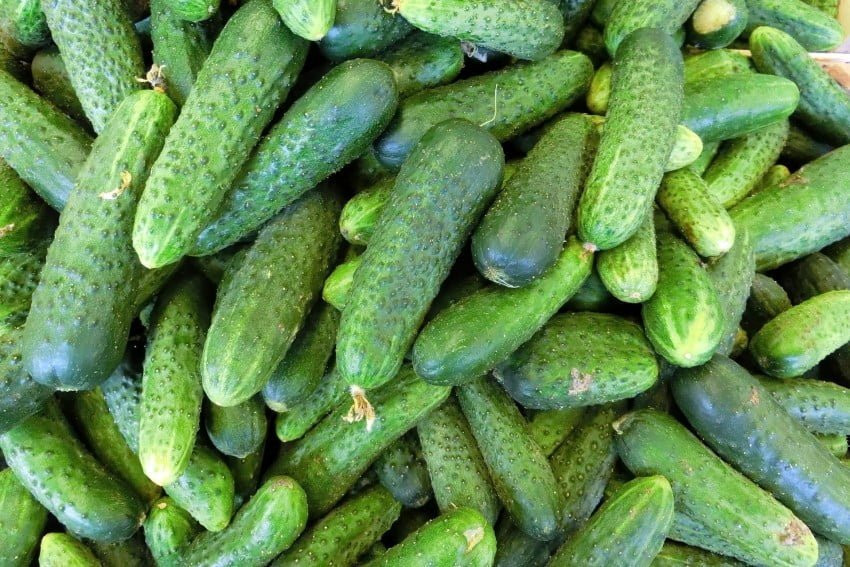 Cucumber Prices in Georgia Hit an Unexpected Peak in July
