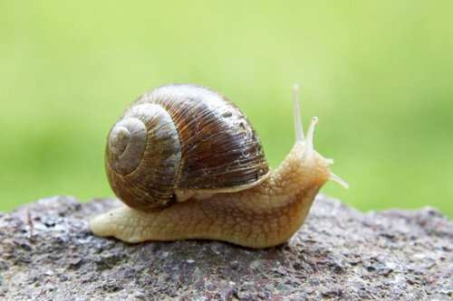 Georgian-Produced Snails Are Exported To Europe, Asia And the USA