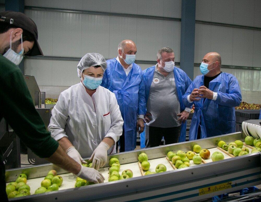 სახელმწიფო პროგრამით 2 700 ტონაზე მეტი არასტანდარტული ვაშლია ჩაბარებული