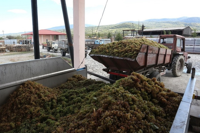დააკავეს ჯგუფი, რომელიც ღვინის ქარხნებში ყურძნის მიღების დროს თაღლითობდა